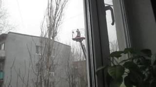 Во время спасательной операции кошка упала с дерева. Видео