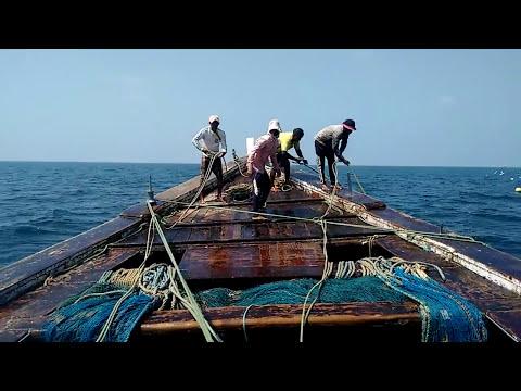 Live Black Pomfret Fishing In Vasai Nirdhar Boat
