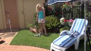 Iguana Hip Leash training in the garden Part 1