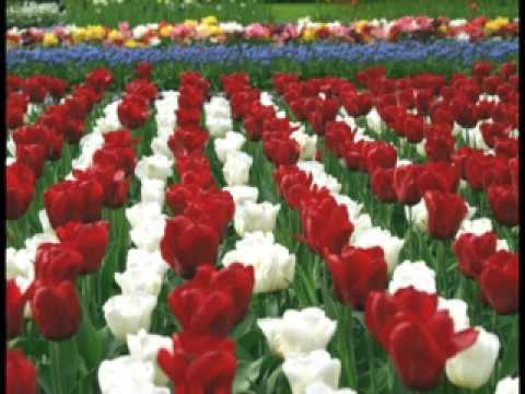 HUMANE SOCIETY - Tip-Toe Thru the Tulips (1967)
