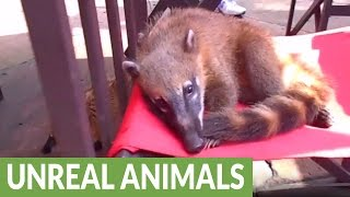 The most adorable animals you've never heard of
