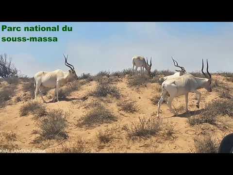 Souss  Massa Agadir Morocco