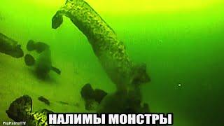 Рыбалка ШОК НАЛИМЫ МОНСТРЫ НА КРАЮ СВАЛА Подводная съемка