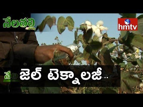 Raichur Cotton Farmers Success Story -  SPLAT-PBW Gel | Nela Talli Special Focus