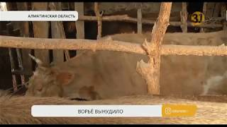 Жители села Теренкара в Алматинской области жалуются на скотокрадов