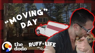 The Pack Moves Into A New House During A Blizzard | Ruff Life With Lee Asher thumbnail