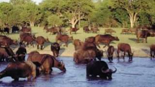 QM2 & African Safari