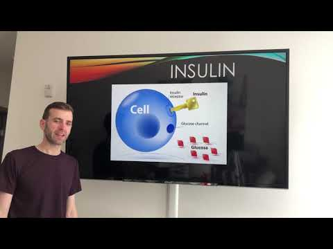 e01:-how-to-gain-or-lose-fat