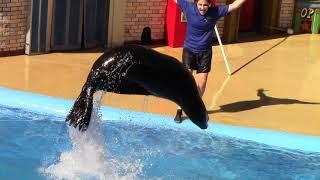 Sea Lion Care and Behavior Inside Look at SeaWorld San Diego (9/15/18)