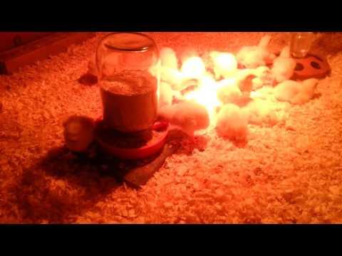 Лампа обогрева для цыплят Оборудование для брудера