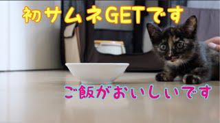 [保護3日目] 鳴きながらご飯を食べる赤ちゃん猫とすっかりお姉さんな子猫 thumbnail