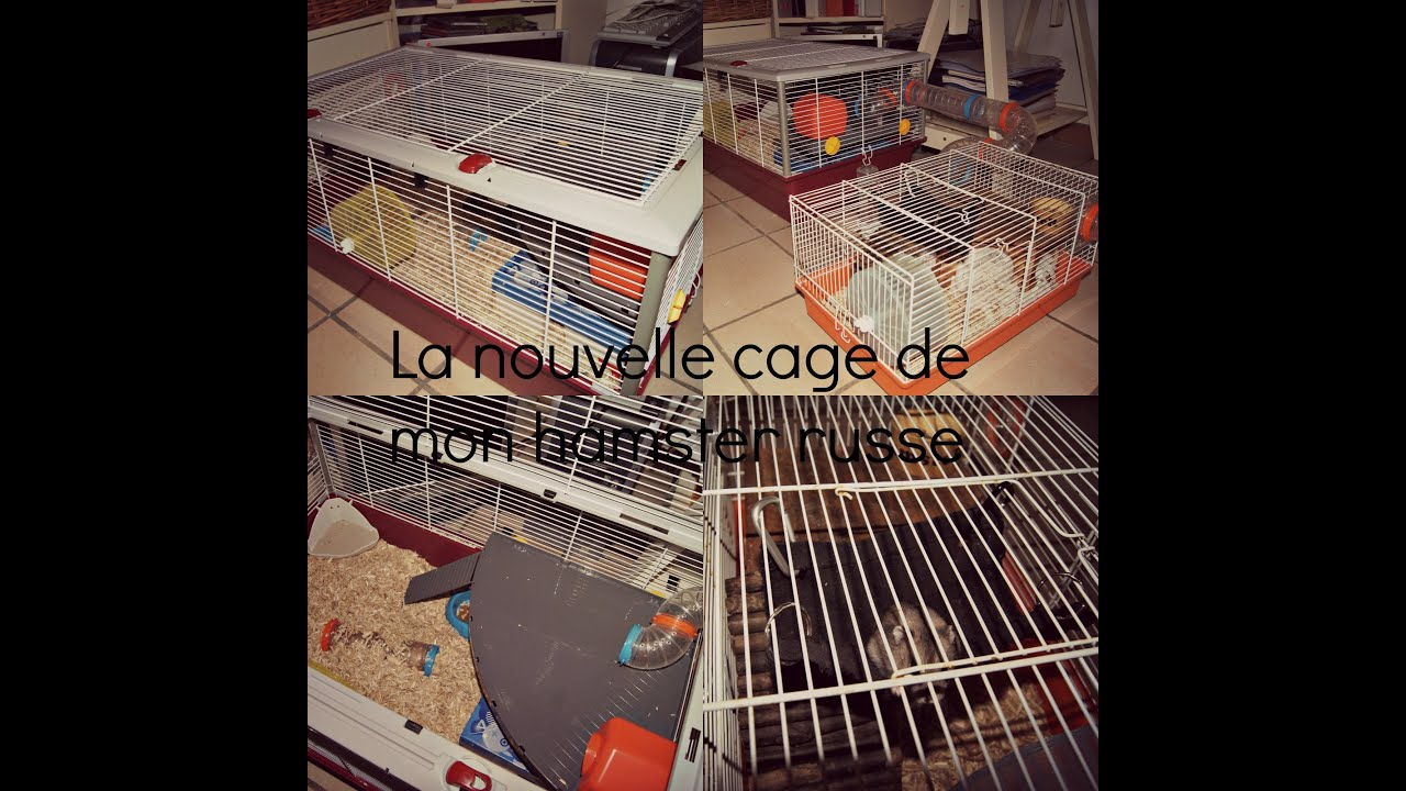la nouvelle cage de mon hamster russe youtube. Black Bedroom Furniture Sets. Home Design Ideas
