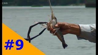 Kiếm tiền triệu từ nghề câu tôm càng xanh trên sông Đồng Nai