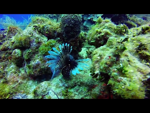 Diving at Grand Cayman