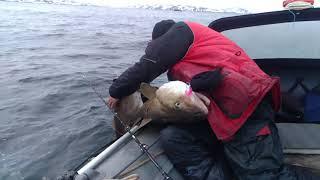 Затащил троих мамок в лодку.  Треска