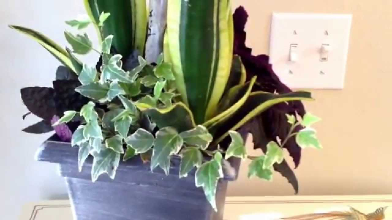 Indoor plants container arrangement idea with sansevieria for Garden arrangement of plants