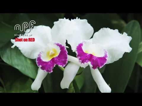 040 NPF FLOWER_DEMO