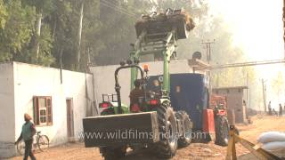 Loading silage for Cattle feeding at Adayana Dairy, Punjab
