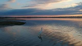 Best Video dji spark White Egret (Белая Цапля)