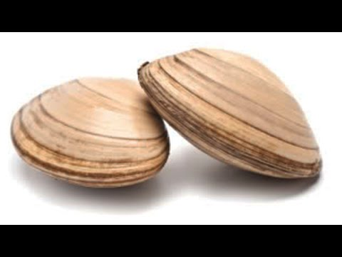 How Do Clams Have Sex?