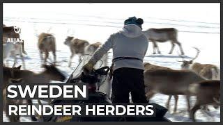 Sweden reindeer herders face revenge attacks after landmark case