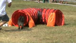 Uppercut Cairn Terrier Manche 2 Jumping Cat A