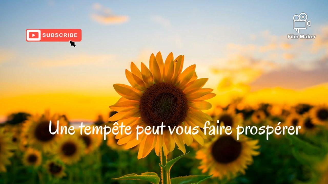 Luis Fonsi Girasoles Paroles Paroles En Francais Letra Lyrics