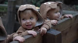 Video FUN DAY AT THE REDWOOD FOREST download MP3, 3GP, MP4, WEBM, AVI, FLV Juni 2018