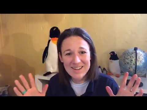 Virtual Vitamin Z   Zoo Educational Lesson: A Penguin Learning Adventure