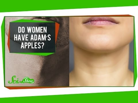 Do Women Have Adam's Apples?
