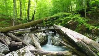 4К  Дикая природа Карпат