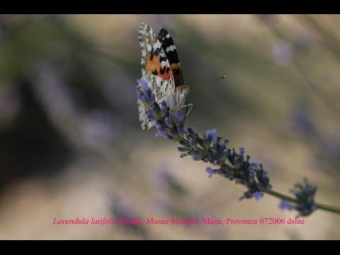 AromaBOX_s1p7_만느 살라공 정원 Mane Salagon musée et jardins _Provence Lavender Route