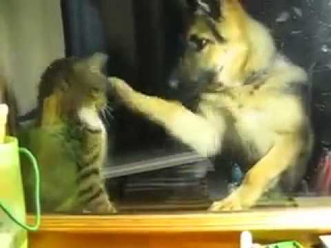 Cat and Dog Boxing