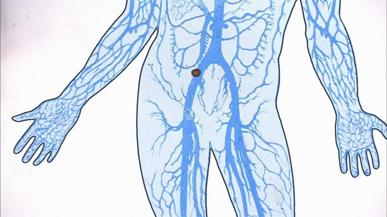 схема кровоснабжения ног