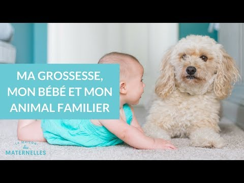 Ma Grossesse, Mon Bébé... Et Mon Animal Familier !  - La Maison Des Maternelles #LMDM