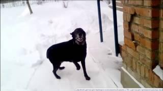 Отзыв Весты Садыченко   укус энцефалитного клеща у собаки