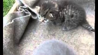 Приколы. Смешные кошки. Кошка и ее котята.