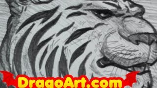 How to Draw a Tiger, Drawing a Tiger Head In Pencil, Step by Step