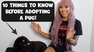 10 Things To Know Before Adopting A Pug