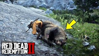 RED DEAD REDEMPTION 2 - ALL LEGENDARY ANIMALS LOCATION (Legendary Grizzly Bear)