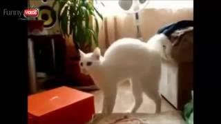 #Видео приколы!!!  Приколы про котов. Смешная подборка про котов#