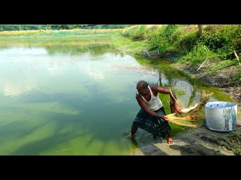 Net Fishing | Catching Fish By Cast Net | Net Fishing in the village (Part-20)