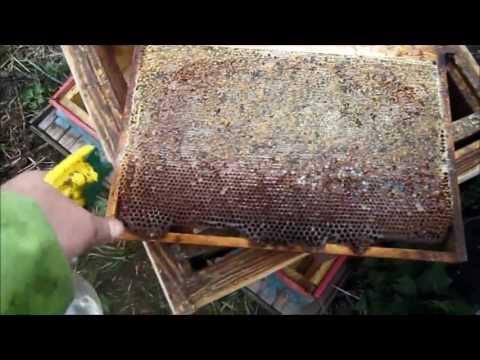 Как усилить слабую семью пчел видео