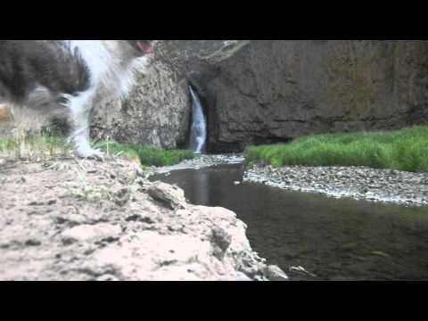 Relaxing Waterfall Footage Hawk Creek, Washington