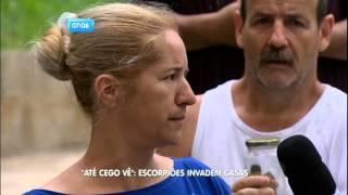 Até Cego Vê: Escorpiões invadem as casas em Ferraz de Vasconcelos