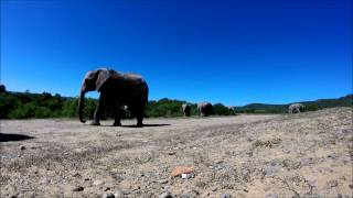 Drones eye view of elephants under a bright blue African sky at Shamwari Game Reserve.