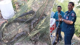 Fisherman Finds Massive Python In His Net