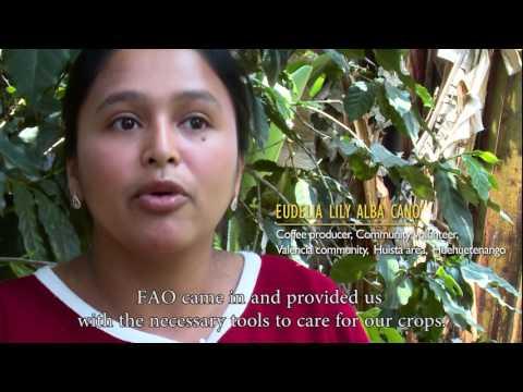 Evaluation of FAO's contribution to Guatemala