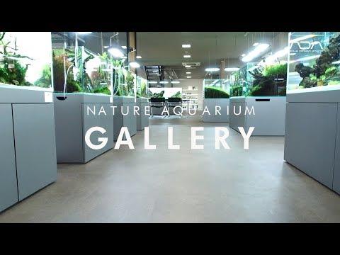 [ADAview] NATURE AQUARIUM GALLERY