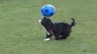 Dog Shows Off Messi -like Soccer Skills